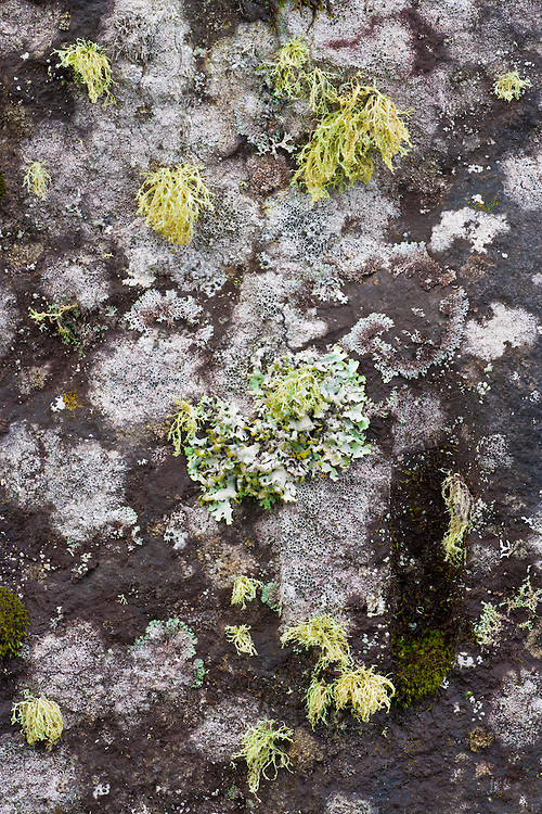 Various species of lichens on a boulder face; Isle Royale National Park, MI