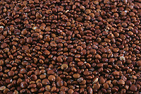 A picture dated November 10, 2005 shows a macro pictiure of red quinoa.  2013  was declared the international year of Quinoa by the UN.  Bolivia is the main producer of quinoa in the world.