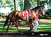 DC Royale Tigre at Delaware Park on 9/19/13