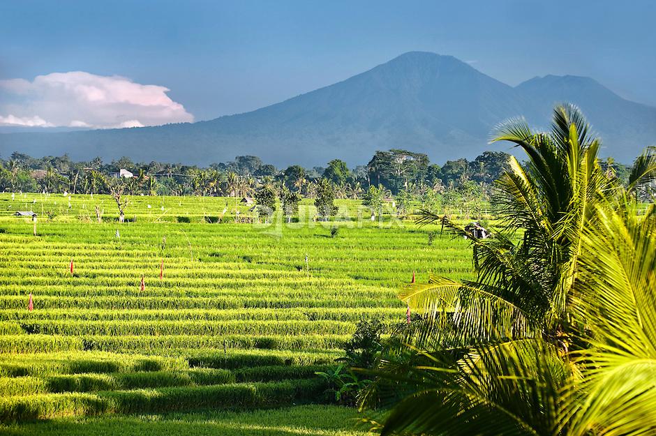 Ricefields beneath the ancient volcano Gunung Batukaru