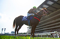 FUCHU,JAPAN-JUNE 03: Mozu Ascot,ridden byChristophe Lemaire ,after winning the Yasuda Kinen at Tokyo Racecourse on June 3,2018 in Fuchu,Tokyo,Japan (Photo by Kaz Ishida/Eclipse Sportswire/Getty Images)