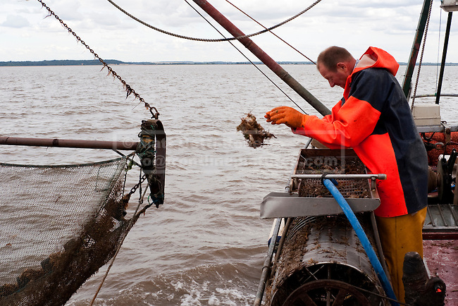 As the nets drag along the sandy bottom of the wash much of Pater and Jamie's time is spent sorting the starfish, crabs and small fish that make up a large proportion of hauls.