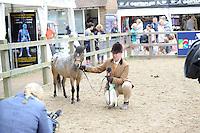 Miniture Horses