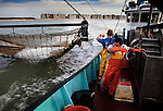 Ivan and Michael, working aboard the beam trawler 'Dini', (0.62) while fishing for grey shrimp (also known as Crangon crangon) off the coast of Oostende, Belgium. <br />