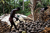 A local villager is seen taking the shell out of the coconut in Valasaltippa village in East Godavari district of Andhra Pradesh, India.