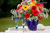 Carl, FLOWERS, photos, SWLA12042,#f# Blumen, Natur, flores, naturaleza