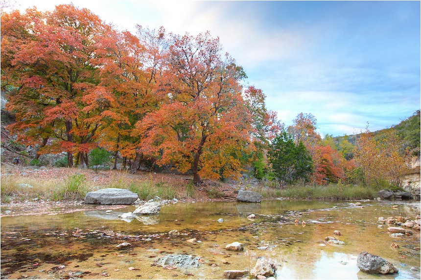 The leaves of maple trees turn red each November in the Texas Hill Country. These glorious colors come from the banks of the Sabinal River in Lost Maples State Park just outside of Vanderpool.