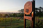 Oregon, Melrose Vineyard, Umpqua Valley wineries, South Umpqua River, sunrise over vines, tasting room,