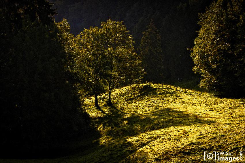 Trees in a field sun backlit