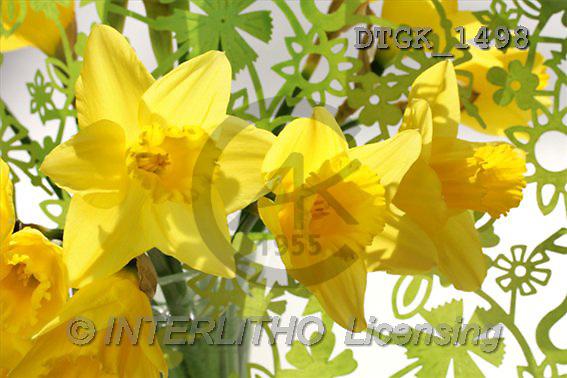 Gisela, FLOWERS, photos(DTGK1498,#F#) Blumen, flores, retrato