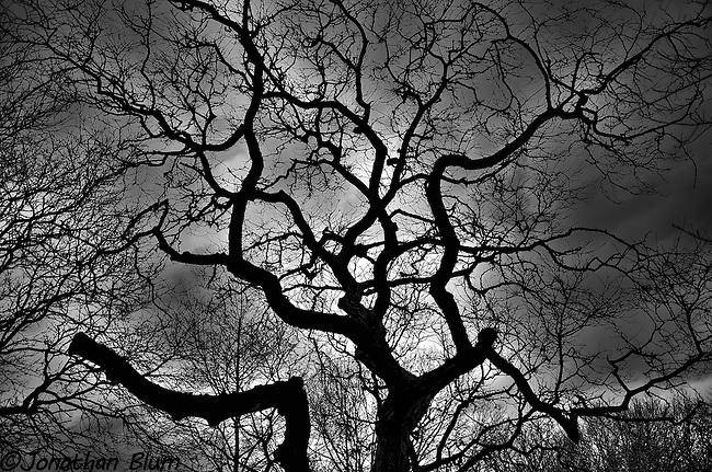 Eerie Tree, Riverside Park/HDR