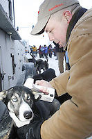 """Saturday March 6 , 2010   Volunteer """"chip reader"""" Chip Graves finds the electronic chip in one of Sue Allen's dogs, which Art Church is running this year just prior to the ceremonial start of the 2010 Iditarod in Anchorage , Alaska"""