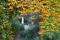 Entry portal cut through Hornbeam hedge (Carpinus betulus) in fall color into secret garden room with rammed earth column in Gary Ratway garden