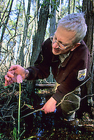 Wildlife Biologist examing a Swamp Pink wildflower, New Jersey