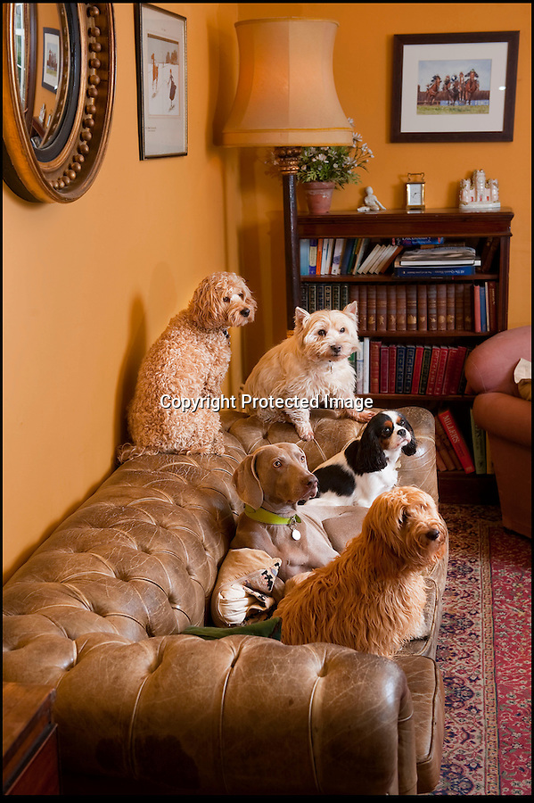 BNPS.co.uk (01202 558833).Pic: Phil Yeomans/BNPS..Upmarket hotel for posh dogs...No kennels or cages, Sarah's clients are treated like family guests....Sarah Mountford of House of Mutt - Britains first 'five star' hotel for hounds - set up to offer luxury accomodation for Britains top dogs in the heart of rural Suffolk...Sarah offers a luxury retreat for some of Britain's most pampered pooches where the highly strung pets can relax and unwind from the stresses of urban life and demanding owners...With no kennels or cages Sarah's pamperred pooches get the canine answer to an up-market Spa resort with long walks, stress checks, warm fires, comfy couches, medical onceover's, shampoos and they can even have their portrait painted..before being delivered back to the door of their grateful owner's..Sarah is struggling to kep up ith demand for her new venture based in Fakenham magna...with many owners asking if they can book in as well.