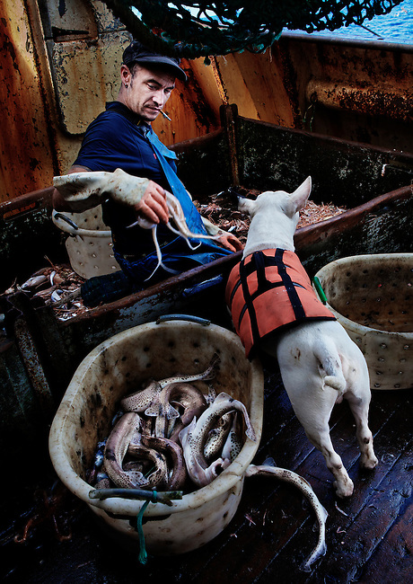 Carl and his dog, Keta, at sea aboard the trawler 'Risten', whose home port is Le Guilvinec, France. <br /> <br /> The boat is mainly fishing for Nephrops (Langoustine), but has a smaller by-catch of other species.<br /> <br /> Most of the time Keta displayed a lack of interest in the fish, but kept a keen lookout for any conga eels. <br /> <br /> Whenever one was landed he would chase it around the deck relentlessly until it could be placed out of his reach.<br /> <br /> (Please see Galleries for further information).