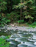 Olympic National Park, WA<br /> Patterns of the Sol Duc River bed rippling over stones beneath a cedar/hemlock forest and overhanging vine maple branches
