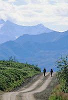Backpackers hike along Denali Park Road. Denali National Park, Alaska