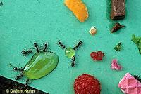 AN10-041z  Ants at picnic