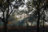Xingu Indigenous Park, Mato Grosso, Brazil. Aldeia Matipu; smoke in the forest at dawn.