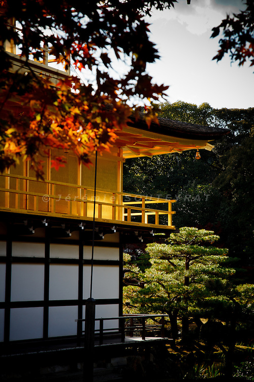Kyoto, November 24 2011 - Kinkaku-ji ( temple of the golden pavillon) in Kyoto.