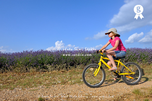 Girl biking by lavender fields, summer  (Licence this image exclusively with Getty: http://www.gettyimages.com/detail/91934864 )