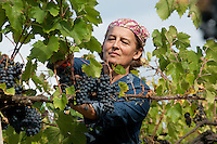 ITALY - Biodynamic Wine Producers