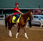 LOUISVILLE, KENTUCKY - APRIL 30: Code of Honor, trained by Claude McGaughey III, exercises in preparation for the Kentucky Derby at Churchill Downs in Louisville, Kentucky on April 30, 2019. Scott Serio/Eclipse Sportswire/CSM