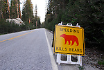 speeding kills bears, Hwy 120, Tioga Pass