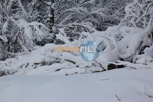 """Pictures on New Years Day from the Dublin Mountains with 12"""" of Snow..Picture Fran Caffrey/newsfile.ie.."""
