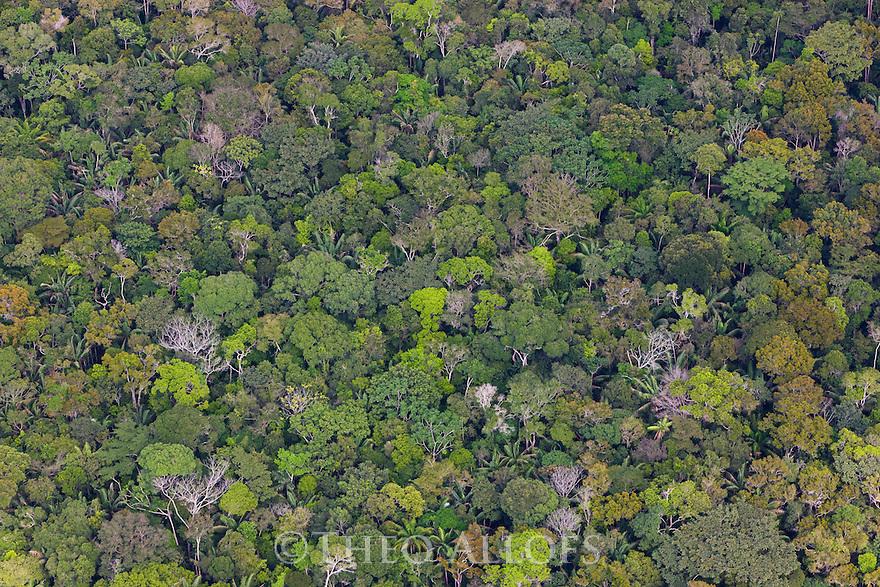Bolivia, Beni Department, aerial view of pristine Amazonian rain forest,