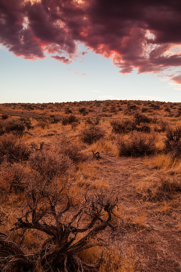 Dry sagebrush and grasses glow a warm yellow as the sun casts red and magenta colors on the clouds overhead during a sunset in Southeast Oregon.
