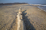 Sea breach of beach lagoon, Benacre Broad, national nature reserve, Suffolk, England