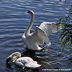 Birds at Norumbega, Charles River, Newton MA