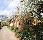 View down a quiet village lane in spring Shottisham, Suffolk