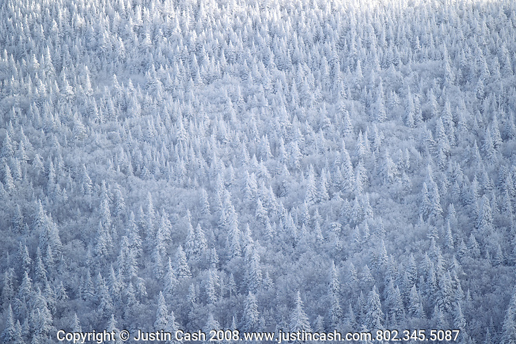 Trees in Vermont after a fresh coating of snow.