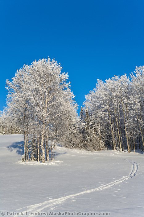 Frosty winter trees along hillside near Fairbanks, Alaska