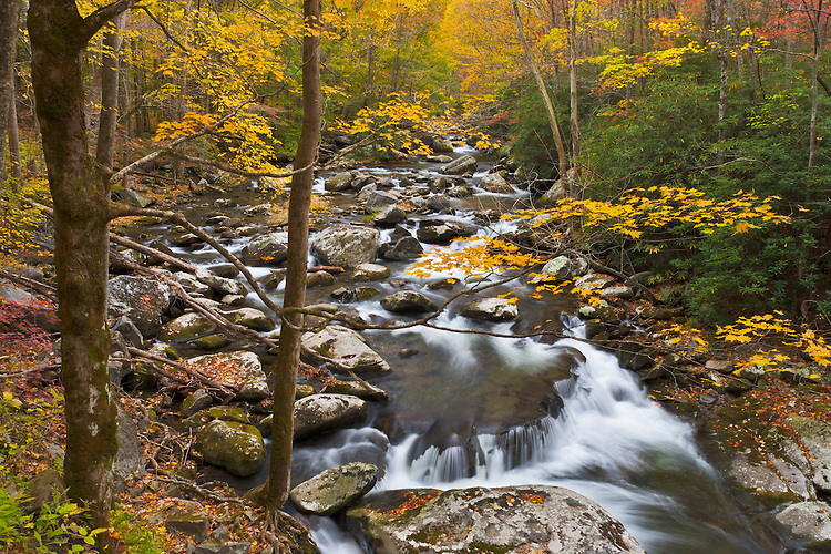 Fall scene along the Middle Prong of the Little River near Tremont; Great Smoky Mountains National Park, TN