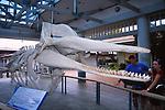 sperm whale skeleton in Kaanapali