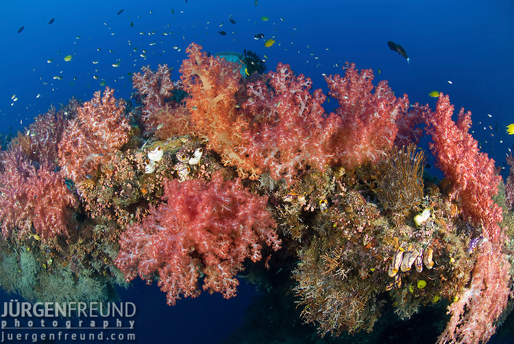 Soft corals covering a natural reef arch.