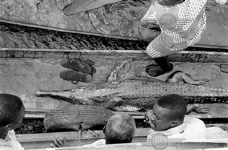 © Marc Schlossman / Panos Pictures..Equateur Province, Democratic Republic of Congo (formerly Zaire). ..The crew of a commercial barge on the Congo River discussing whether or not to buy the crocodile brought to the barge in a pirogue by a trader from a riverside village.
