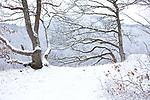 Europa, DEU, Deutschland, Baden-Wuerttemberg, Landkreis Reutlingen, Lichtenstein, Schwaebische Alb, Albtrauf am Traifelberg, Winter, Schnee, Natur, Umwelt, Landschaft, Jahreszeiten, Stimmungen, Landschaftsfotografie, Landschaften, Landschaftsphoto, Landschaftsphotographie, Wetter, Wetterelemente, Wetterlage, Wetterkunde, Witterung, Witterungsbedingungen, Wettererscheinungen, Meteorologie, Wettervorhersage, <br /> <br /> [Fuer die Nutzung gelten die jeweils gueltigen Allgemeinen Liefer-und Geschaeftsbedingungen. Nutzung nur gegen Verwendungsmeldung und Nachweis. Download der AGB unter http://www.image-box.com oder werden auf Anfrage zugesendet. Freigabe ist vorher erforderlich. Jede Nutzung des Fotos ist honorarpflichtig gemaess derzeit gueltiger MFM Liste - Kontakt, Uwe Schmid-Fotografie, Duisburg, Tel. (+49).2065.677997, ..archiv@image-box.com, www.image-box.com]