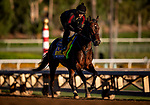 OCT 25: Breeders' Cup Classic entrant McKinzie, trained by Bob Baffert, gallops at Santa Anita Park in Arcadia, California on Oct 25, 2019. Evers/Eclipse Sportswire/Breeders' Cup