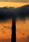 A heavy dark cloud of fog peaked the south tower of the Golden Gate Bridge as two seagulls, like bookends, frame the sky at dust in San Francisco, California.