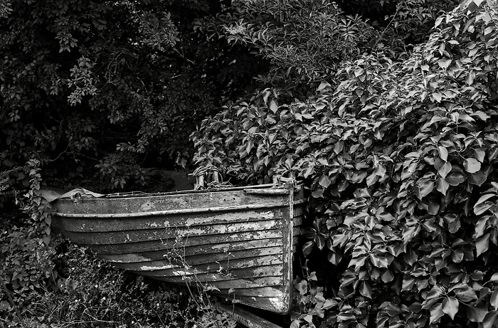 A weathered old rowboat half hidden in the undergrowth.
