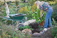 Gardener spreading fresh compost on her organic herb garden