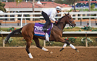 DEL MAR, CA - OCTOBER 02: Princess Warrior, owned by Evan Trommer, Matthew Trommer & Andrew Trommer and trained by Kenneth G. McPeek, exercises in preparation for the 14 Hands Winery Breeders' Cup Juvenile Fillies at Del Mar Thoroughbred Club on November 2, 2017 in Del Mar, California. (Photo by Anna Purdy/Eclipse Sportswire/Breeders Cup)