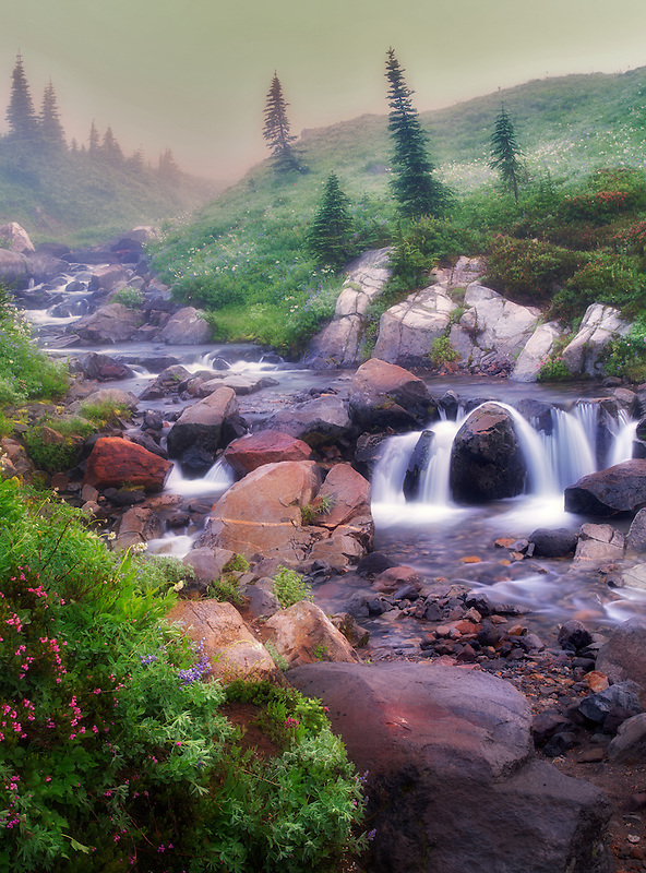 Edith Creek, wildflowers, waterfalls and fog. Mt. Rainier National Park, Washington