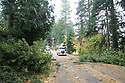 Nov 2, 2013:  Power crew members form Potelco worked to repair a #4 Copper wire that was knocked down when a tree was blown down along Tracyton NW Blvd and Stampede NW Blvd.