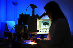 Forensic entomologist at microscope